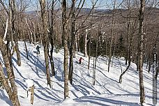 Photo of two skiers skiing through the trees at Burke