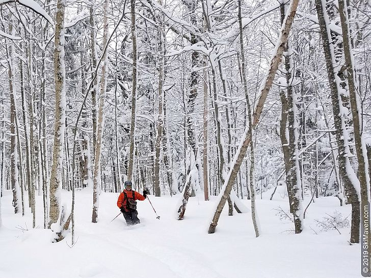 Photo of a skier making powder turns surrounded by hardwood trees