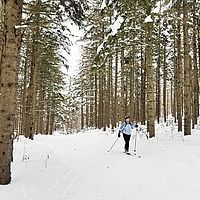 Photo of cross-country skier and tall pine trees