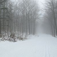 Foggy on cross-country skiing trails at Trapp Family Lodge