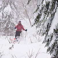 Photo of skier turning in snow with hobble brush sticking out
