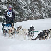 Fresh snow and sled dog racing, too!