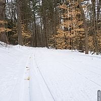 Classic ski tracks in the woods with beech and pine trees