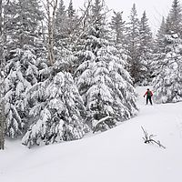 Skier breaks trail in deep snow surrounded by snowy trees