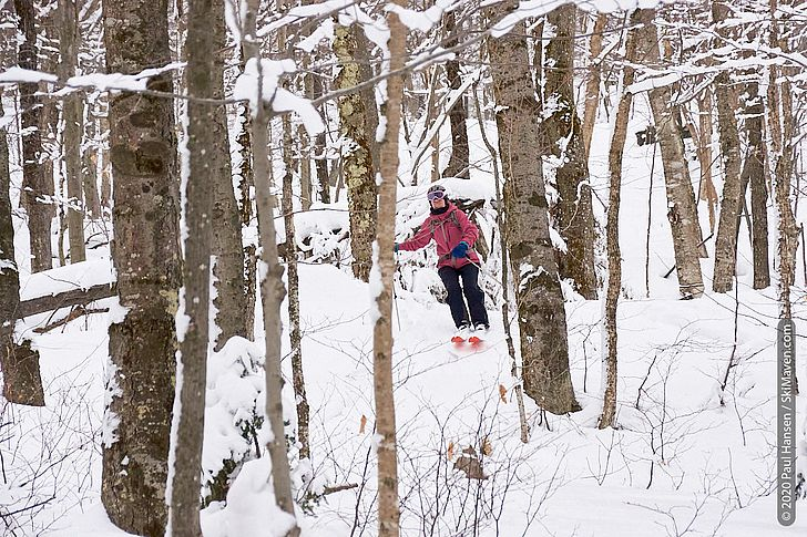 Photo of skier making turns between hardwood trees