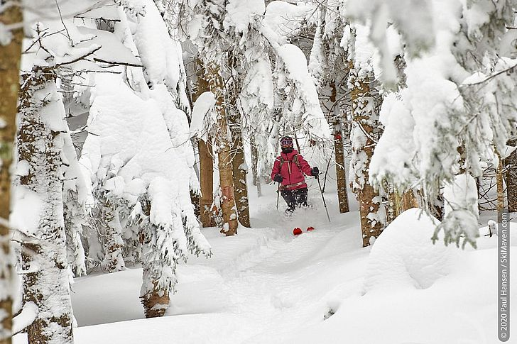Photo of skier plowing through snow while skiing between some trees
