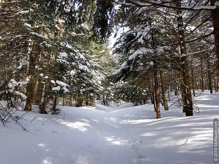Backcountry ski trail with snow-covered trees