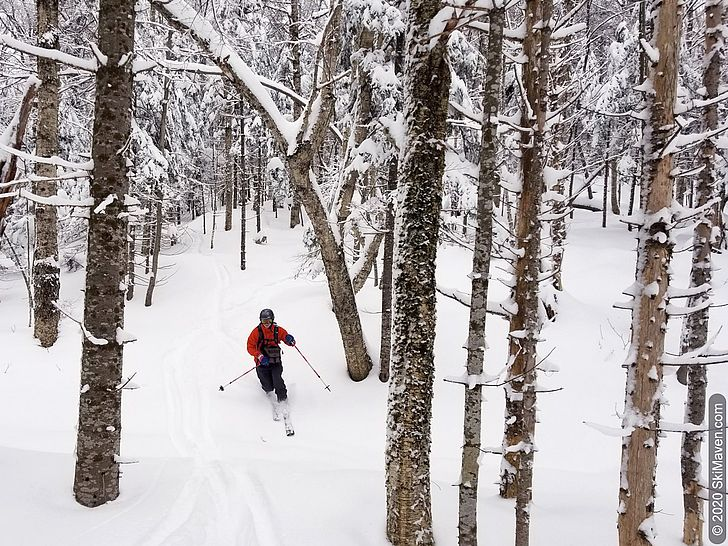 Photo of telemark skier among hardwood trees