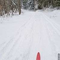 Photo of red skis on a snowy trail