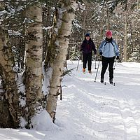 Cross-country skiing in fresh snow in Stowe