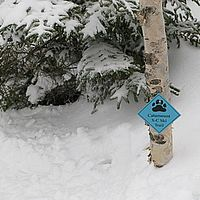 A Catamount Trail marker that is nearly buried in last winter's snow