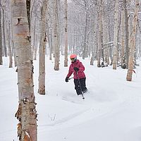 Photo of skier turning in fresh snow in the glades