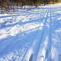 Photo of classic ski tracks and the tips of skis
