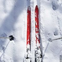Photo of red skis in fluffy, white snow