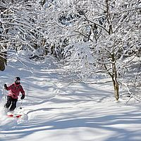 Photo of a skier in the snowy woods