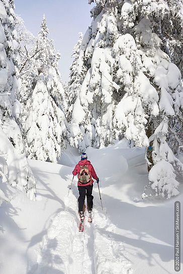 Photo of skier in the skin track with snow-covered trees