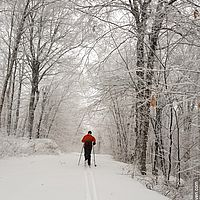 Photo of a Nordic skier skiing away surrounded by frosty trees